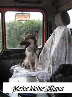 - (Versicherung, Schadensersatz, hund)